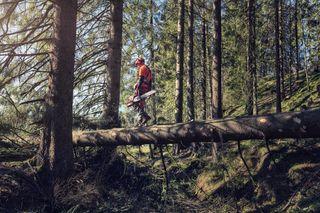 Logger walking on log with 572 XP